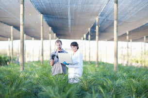 Worker and scientist with laptop in plant nurseryの写真素材 [FYI03500062]