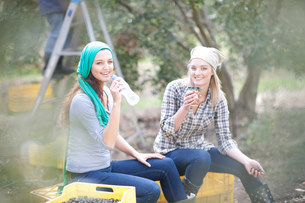 Women sitting on crates taking a break in olive groveの写真素材 [FYI03500255]