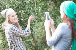 Woman taking photo of friend in olive groveの写真素材 [FYI03500257]