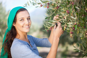 Woman picking olives  in olive grove, portraitの写真素材 [FYI03500258]