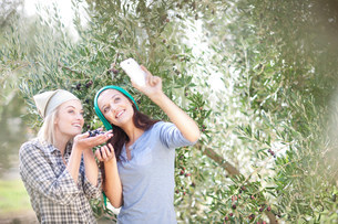 Women taking photo of themselves in olive groveの写真素材 [FYI03500260]