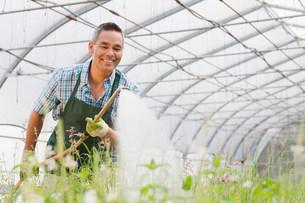 Mature man watering plants in garden centreの写真素材 [FYI03501005]