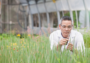 Mature man using scissors on plants in greenhouseの写真素材 [FYI03501037]