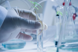 Scientist holding test tube with seedlingの写真素材 [FYI03501603]