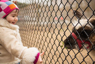Girl looking at animal through wire fence in zooの写真素材 [FYI03502704]