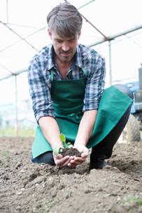 Organic farmer holding seedling in polytunnelの写真素材 [FYI03503778]