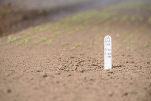 Seedling label on farmの写真素材 [FYI03505551]