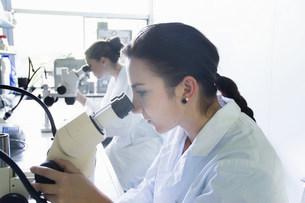 Biology students using microscopesの写真素材 [FYI03505839]