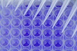 Close up of 96-well microtiter plate with crystal violet solの写真素材 [FYI03506928]