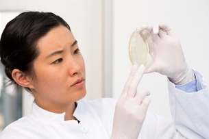 Female scientist examining bacterial growth/plaques in petriの写真素材 [FYI03506940]