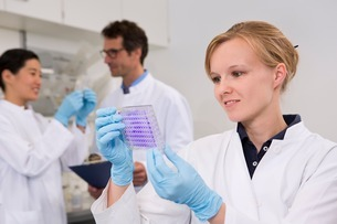 Scientist with 96-well microtiter plate with crystal violetの写真素材 [FYI03506959]
