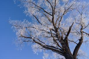霧氷の写真素材 [FYI03508032]