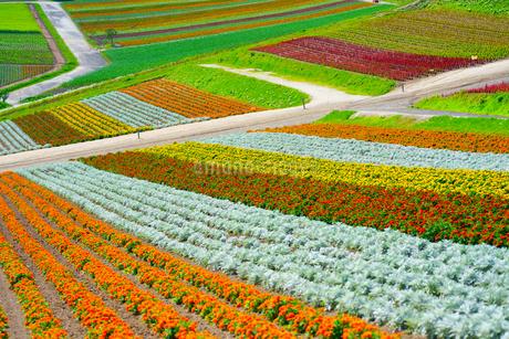 花畑の写真素材 [FYI03508077]