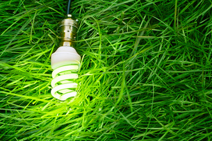 Still life of energy saving lightbulb on grassの写真素材 [FYI03508745]