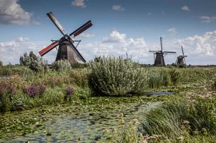 Windmills and canal marsh, Kinderdijk, Netherlandsの写真素材 [FYI03508992]