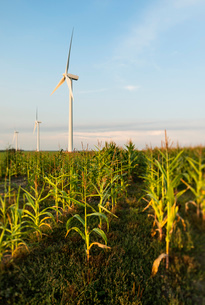 Wind turbines in agricultural field, Almere, Flevoland, Netherlandsの写真素材 [FYI03509233]