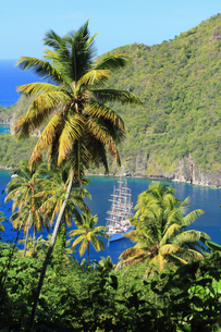 Palm trees and sailing ship, St Lucia, Caribbeanの写真素材 [FYI03510558]