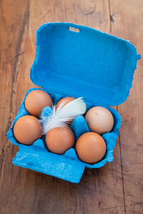 Still life of six brown eggs in open blue egg boxの写真素材 [FYI03512183]