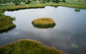 Tranquil waters, Okavango Delta, Chobe National Park, Botswana, Africaの写真素材 [FYI03513650]