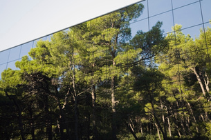 Pine tree forest reflected in modern glass clad buildingの写真素材 [FYI03513820]