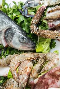 Fresh seafood on iceの写真素材 [FYI03514732]