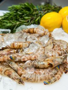 Fresh seafood on iceの写真素材 [FYI03514738]