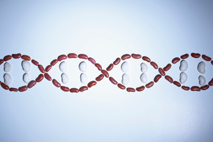Still life of beans arranged in shape of a DNA strand (plant genetic research)の写真素材 [FYI03515146]