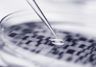 DNA (deoxyribonucleic acid) autoradiogram in a petri dishの写真素材 [FYI03515471]