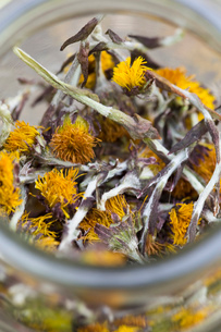 Close up of a jar containing dried coltsfoot (Tussilago farfara) stems and flowers. Used in herbal mの写真素材 [FYI03516041]