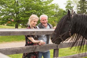 Mature couple feeding horse through fenceの写真素材 [FYI03516452]
