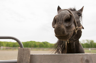 Portrait of a curious horseの写真素材 [FYI03516455]