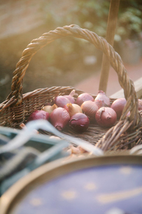 Basket of plant bulbs in greenhouseの写真素材 [FYI03517013]