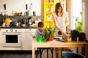 Boy and mother tending pot plants at kitchen tableの写真素材 [FYI03517948]