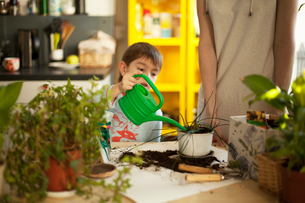 Boy watering pot plants at kitchen tableの写真素材 [FYI03517949]
