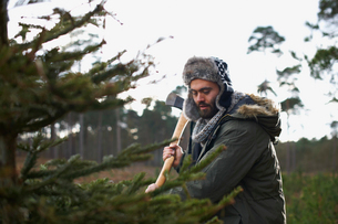 Young man chopping Christmas tree in forestの写真素材 [FYI03518698]