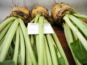 Sugar beet in competition at English agricultural showの写真素材 [FYI03521543]