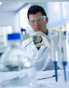 Scientist making culture in laboratoryの写真素材 [FYI03521821]