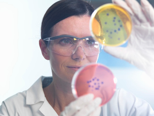 Scientist examining set of petri dishes in microbiology labの写真素材 [FYI03522490]