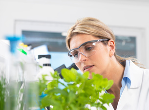 Scientist viewing development of experimental plants in research laboratoryの写真素材 [FYI03523368]