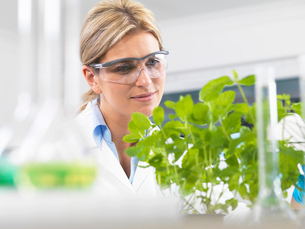 Scientist viewing development of experimental plants in research laboratoryの写真素材 [FYI03523369]