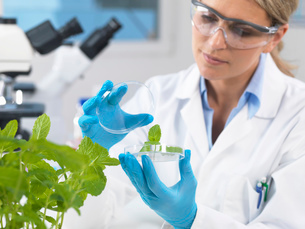 Scientist viewing development of experimental plants in research laboratoryの写真素材 [FYI03523370]