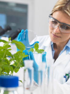 Scientist viewing development of experimental plants in research laboratoryの写真素材 [FYI03523371]