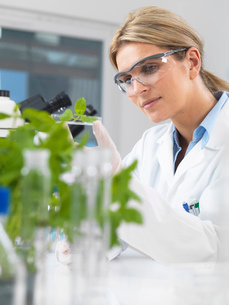 Scientist viewing development of experimental plants in research laboratoryの写真素材 [FYI03523373]