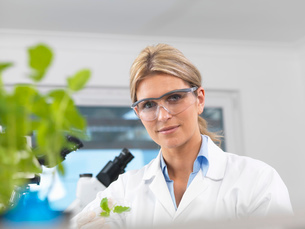 Scientist viewing development of experimental plants in research laboratoryの写真素材 [FYI03523374]
