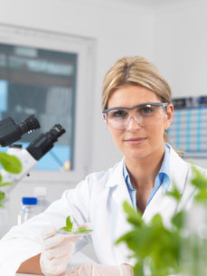 Scientist viewing development of experimental plants in research laboratoryの写真素材 [FYI03523375]