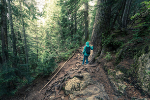 Rear view of female hiker moving down steep mountain forest, British Columbia, Canadaの写真素材 [FYI03523667]