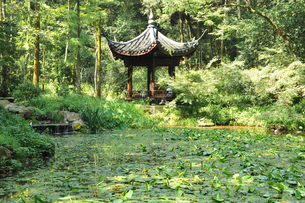 Pavilion by lotus pool, surrounded by trees, Hangzhou, Chinaの写真素材 [FYI03523757]