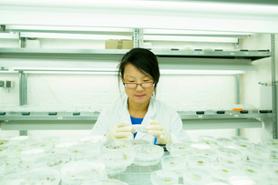 Young female scientist looking at plant sample in petri dishの写真素材 [FYI03523838]