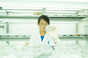 Young female scientist looking at plant sample in petri dish in labの写真素材 [FYI03523839]