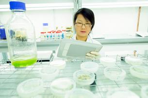Female scientist using digital tablet in plant sample labの写真素材 [FYI03523841]